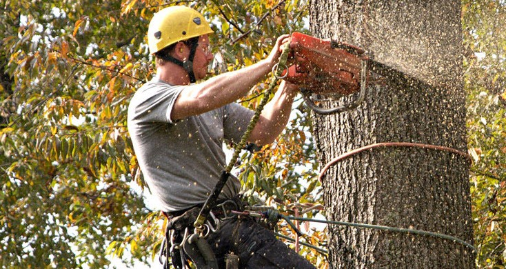 Why individuals use tree trimming services?
